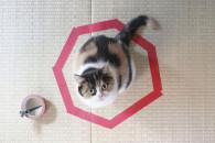 如何围住神经猫