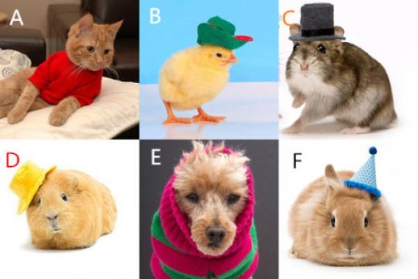 下面哪个动物看起来更和你心意?