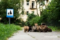 立陶宛两男生为小动物设迷你路标