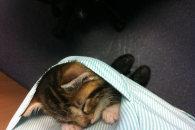当兽医是怎样的体验:就是久了口袋会长出猫