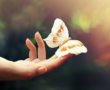 你是哪只潜力花蝴蝶?