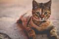 我要代表猫咪,消灭你的压力
