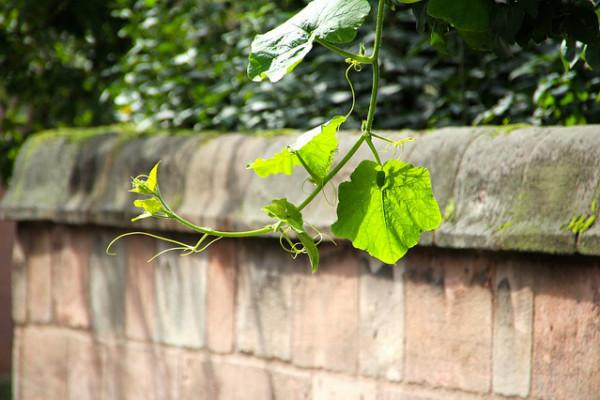 你适合养什么植物?