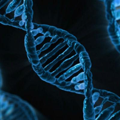 测测你的性格基因
